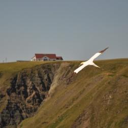 IMT Newfoundland 2010 WP 36