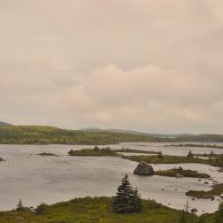 IMT Newfoundland 2010 WP 44